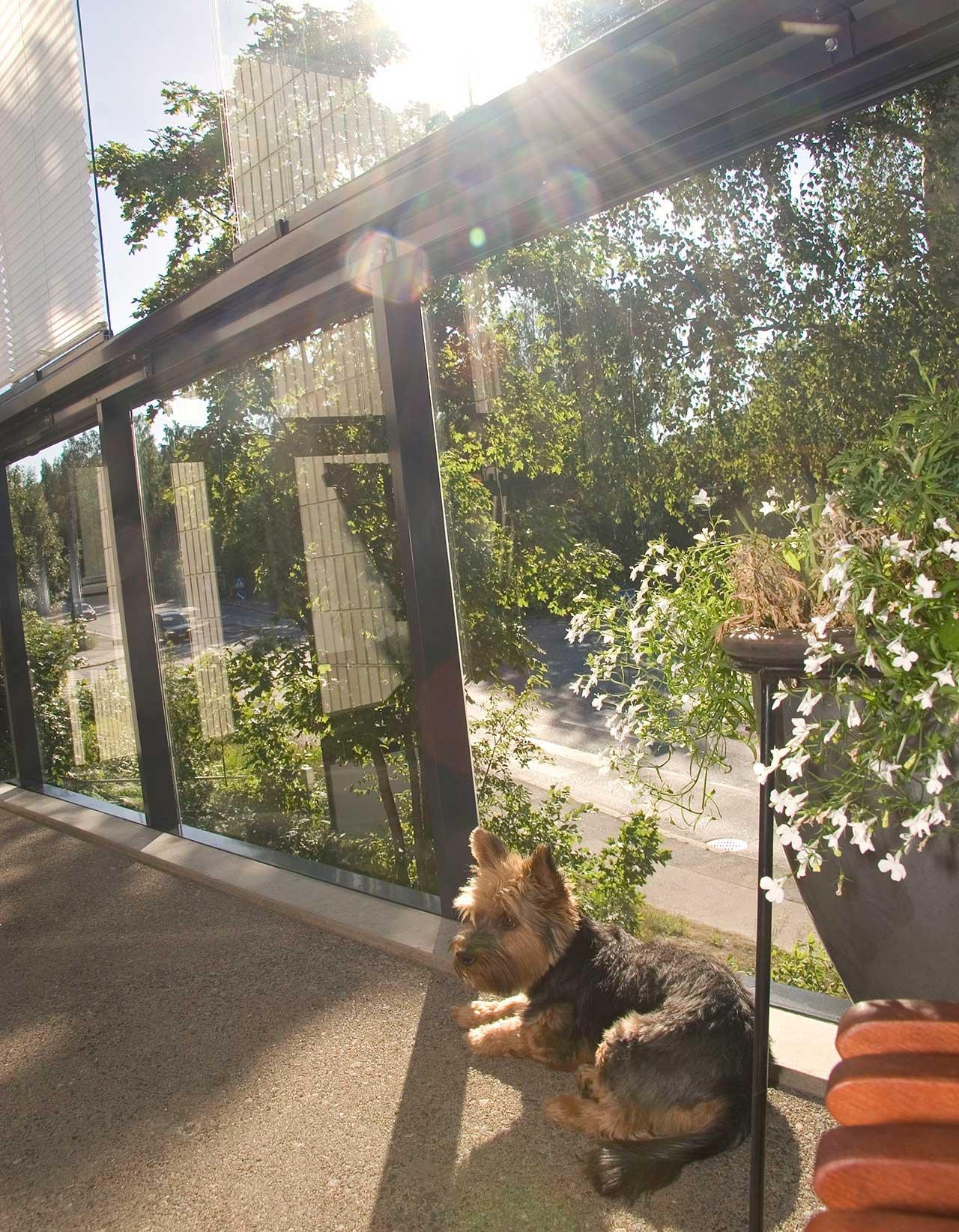 Husdjur på balkongen - Lumon balkonginglasningar