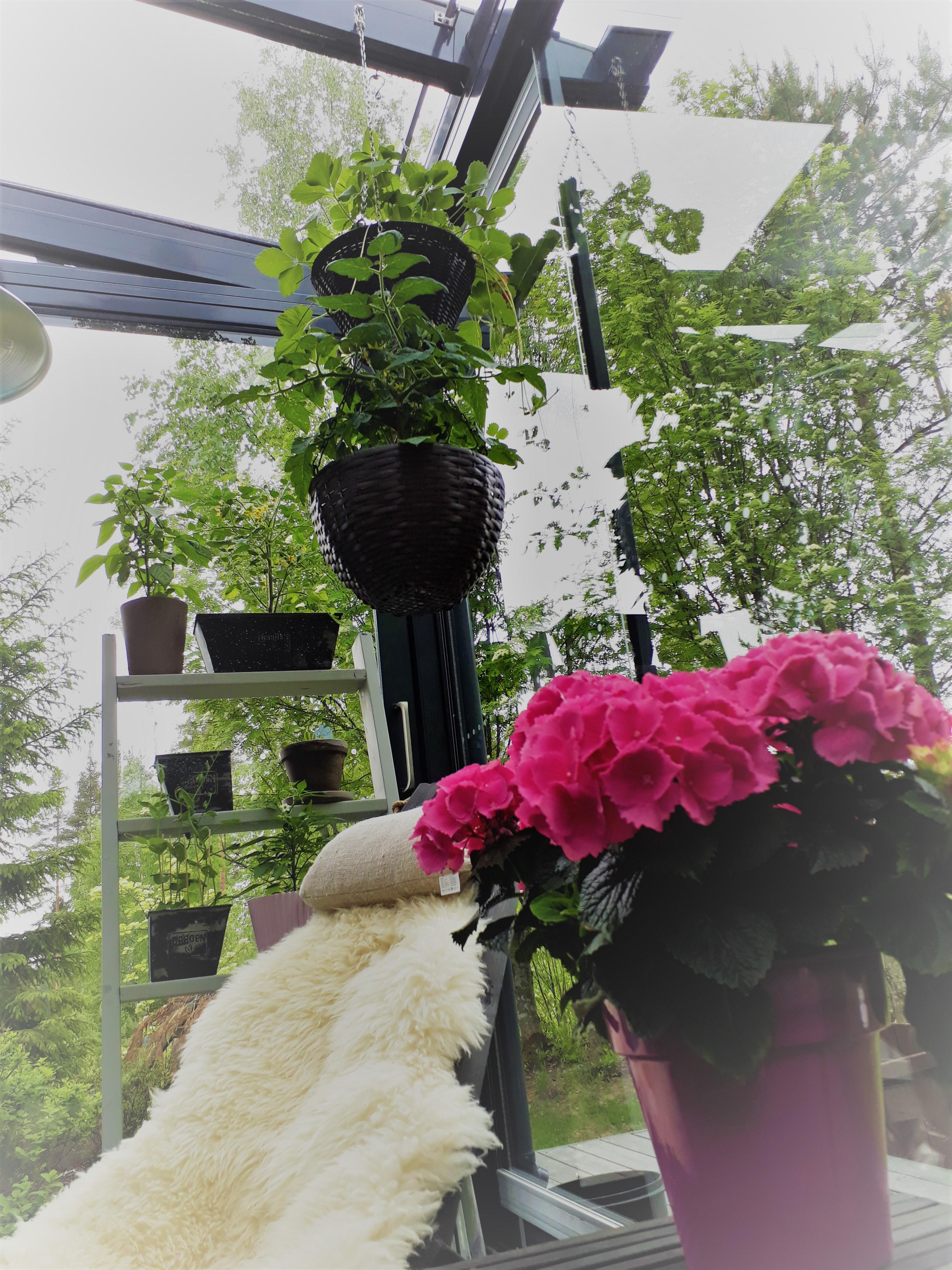 Terassin kevätkasvit