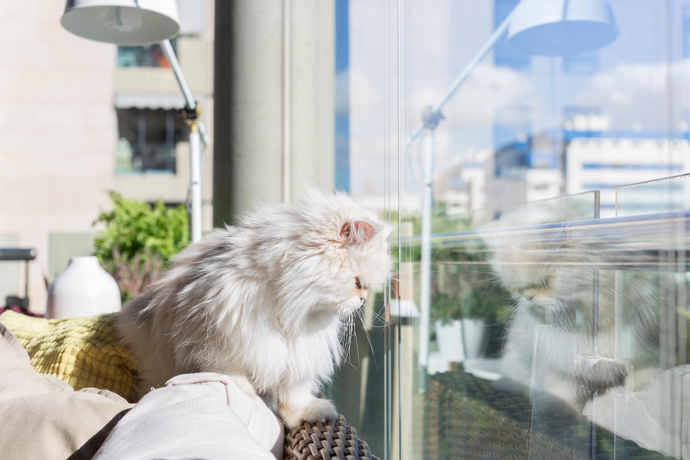 Kissa lasitetulla terassilla