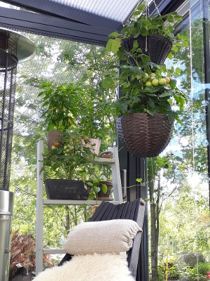 Tee lasiterassista kasvihuone