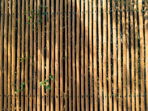 Pared de bambu