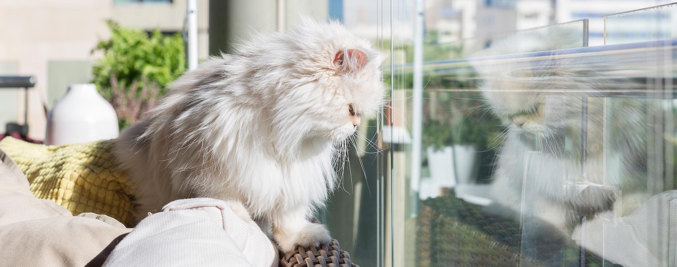 Kissa-lasitetulla-terassilla