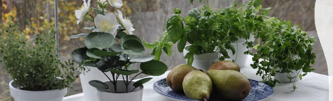 Lumon lasitettu parveke kasvit