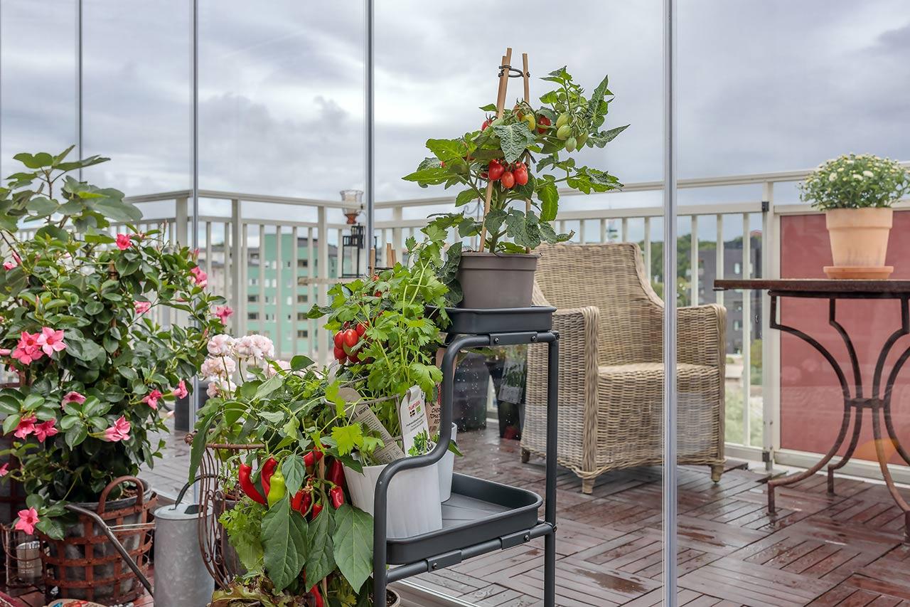 Odla på balkongen - Lumon balkonginglasningar
