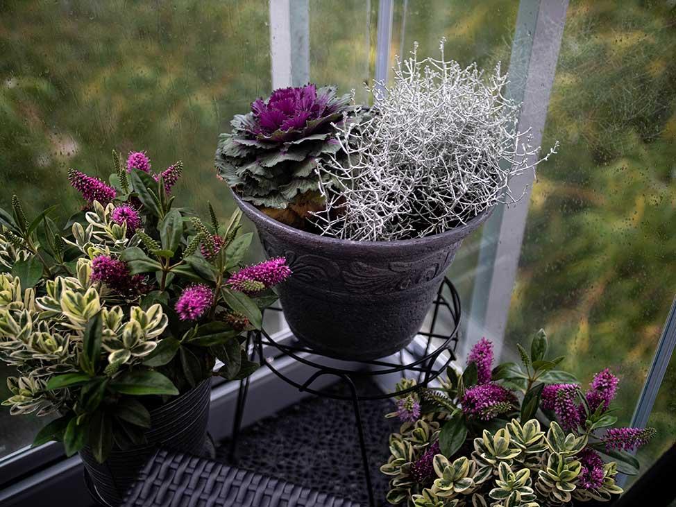 Höstväxter på balkongen